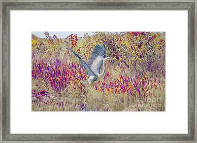 Fly Fly Away Framed Print