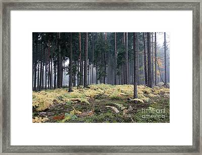 Fog In The Forest With Ferns Framed Print by Michal Boubin