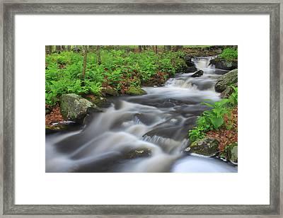 Forest Stream In Spring Framed Print by John Burk