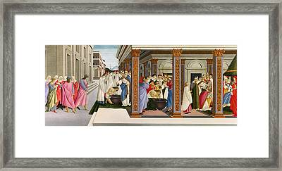 Four Scenes From The Early Life Of Saint Zenobius Framed Print by Sandro Botticelli