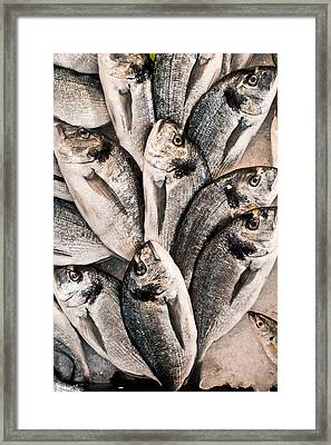 Fresh Fish Framed Print by Tom Gowanlock
