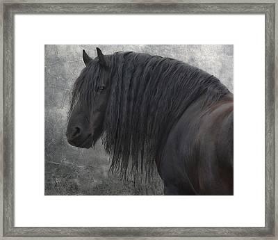 Frisian Stallion Framed Print