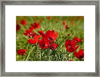 Full Bloom Anemone Framed Print