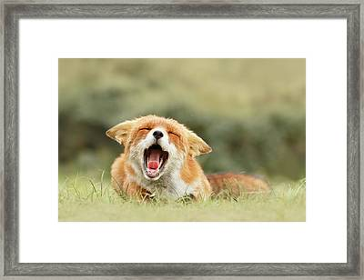 Funny Fox Framed Print by Roeselien Raimond