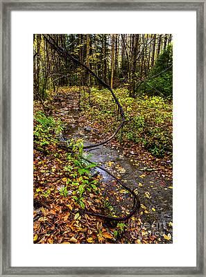 Gauley River Headwaters Framed Print by Thomas R Fletcher
