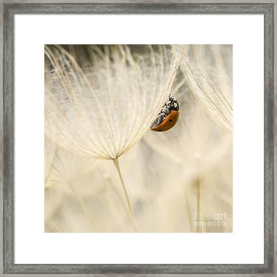 Geropogon Hybridus Dandelion Framed Print