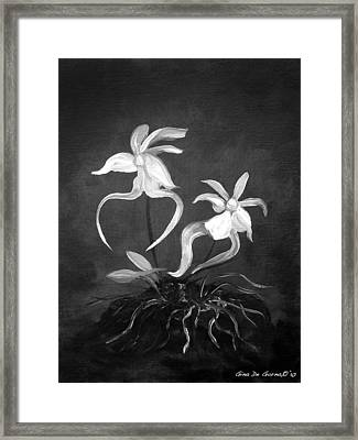 Ghost Orchids Framed Print