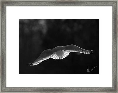 Glowing Wings Framed Print by Karol Livote