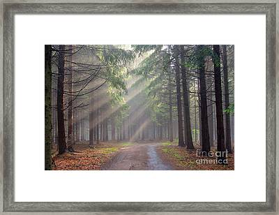 God Beams - Coniferous Forest In Fog Framed Print
