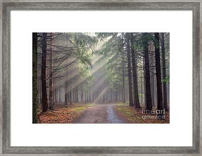 God Beams - Coniferous Forest In Fog Framed Print by Michal Boubin
