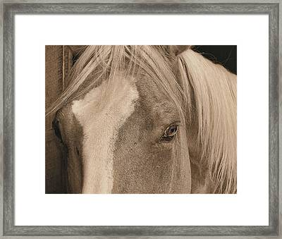 Golden Palomino Framed Print by JAMART Photography