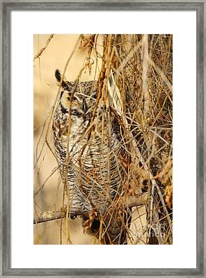 Great Horned Owl Framed Print by Dennis Hammer