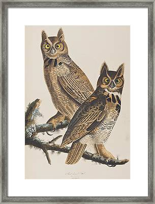 Great Horned Owl Framed Print by John James Audubon
