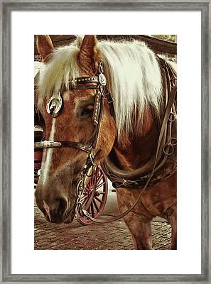 Haflinger Pony Framed Print by Dressage Design