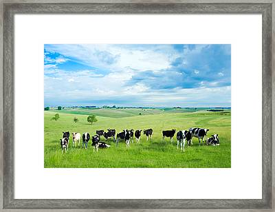 Happy Cows Framed Print by Todd Klassy