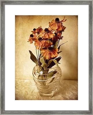 Helenium Framed Print by Jessica Jenney