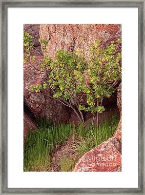 Framed Print featuring the photograph Hidden by Iris Greenwell
