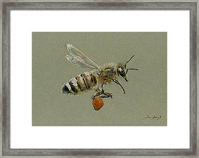 Honey Bee Watercolor Painting Framed Print by Juan  Bosco