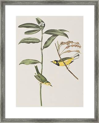 Hooded Warbler  Framed Print by John James Audubon