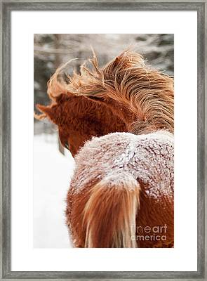 2 Horses Framed Print