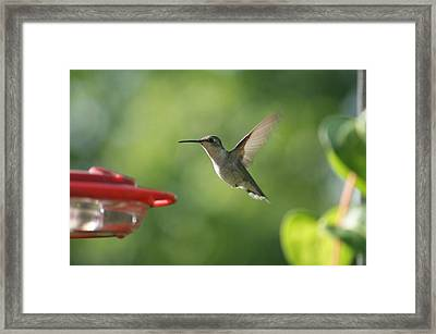 Hummer Framed Print by Heidi Poulin