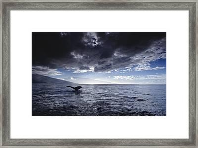 Humpback Whale Tail Maui Hawaii Framed Print