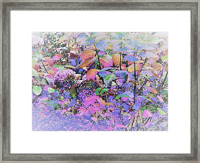 Hydrangea Framed Print by Ann Johndro-Collins