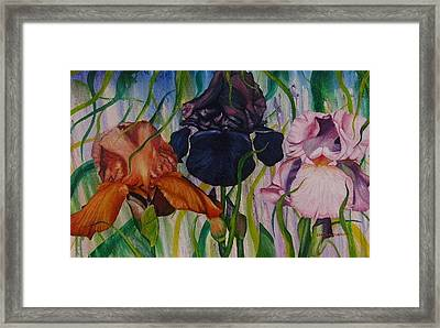 I Thought Tulips Framed Print