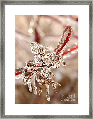 Icy Branches Framed Print by JT Lewis