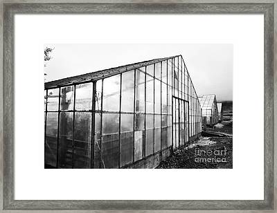 illuminated greenhouses heated by geothermal energy for growing tomatoes Hveragerdi iceland Framed Print