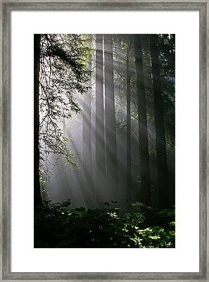 In The California Redwood Forest. Framed Print by Ulrich Burkhalter