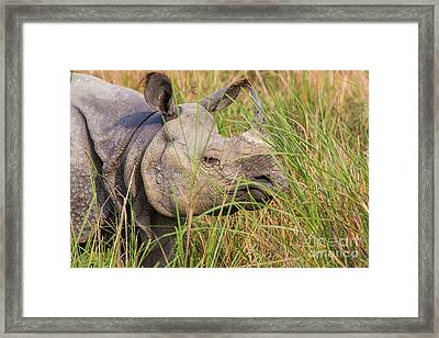 Indian Rhinoceros, India Framed Print