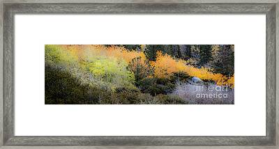 Inyo National Forest Framed Print