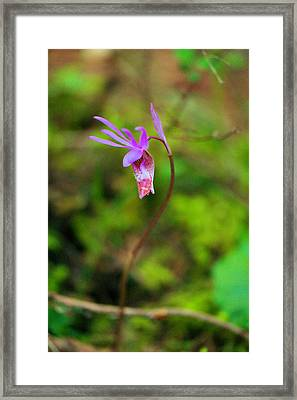 Jack In The Pulpit Framed Print by Jeff Swan