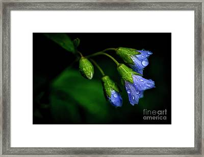 Framed Print featuring the photograph Jacobs Ladder by Thomas R Fletcher