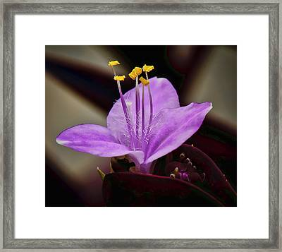 2 Jew Framed Print by Michael Putnam