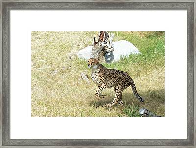 Framed Print featuring the photograph Jump by Fraida Gutovich