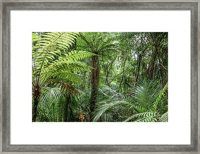Framed Print featuring the photograph Jungle Ferns by Les Cunliffe