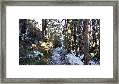 King Billy Forest Cradle Mountain Framed Print by Sarah King