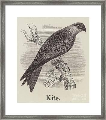 Kite Framed Print by English School