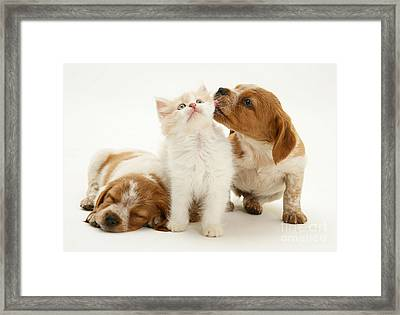 Kitten And Puppies Framed Print by Jane Burton