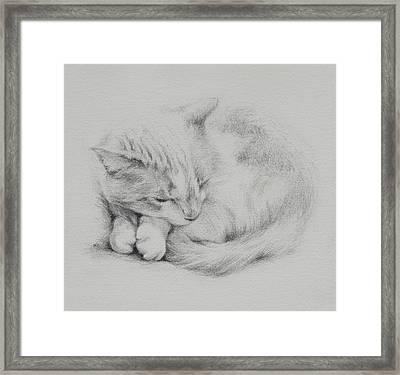 Kitty Framed Print by Rachel Christine Nowicki