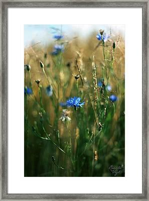 Kornblumen Framed Print