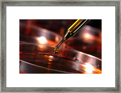 Laboratory Petri Dishes In Science Research Lab Framed Print by Olivier Le Queinec