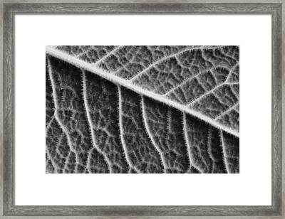 Framed Print featuring the photograph Leaf by Chevy Fleet