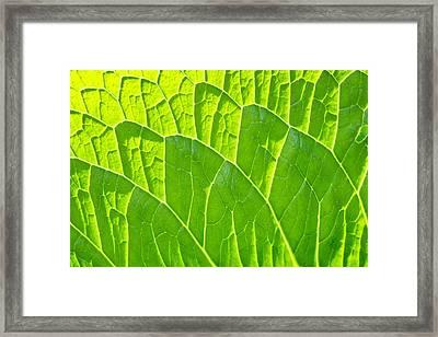 Leaf Detail Framed Print by Tom Gowanlock
