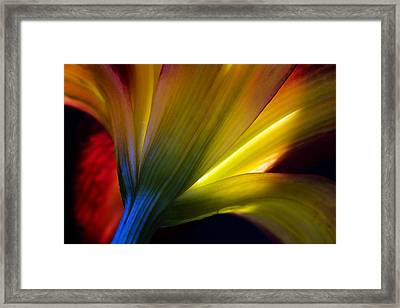 Lily Lumina Framed Print by Shawn Young