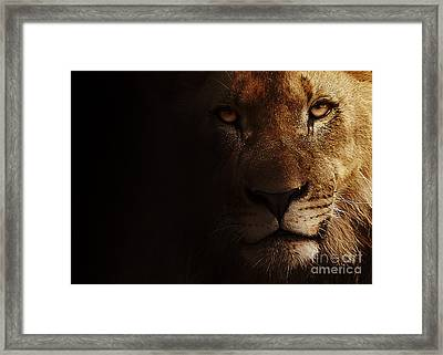 Framed Print featuring the photograph Lion by Christine Sponchia