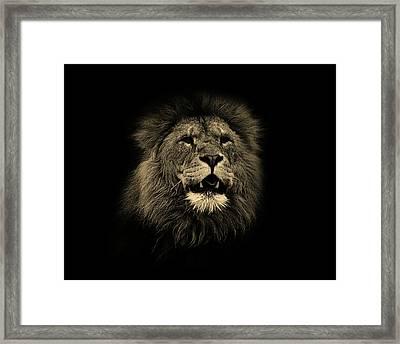 Lions Roar Framed Print by Martin Newman