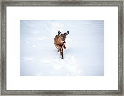 Little One Framed Print by Karol Livote